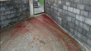 Lugar en el que los agentes entienden que se ha llevado a cabo el maltrato animal a los caballos