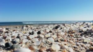 Milions d'esferes de plàstic que han aparegut en la platja de la Pineda