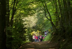 Passejada Parc Natural del Montseny