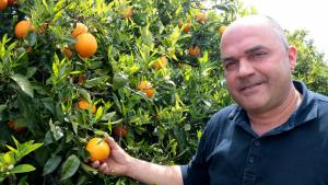 Dimiteix Carlos Roig, responsable nacional dels cítrics d'Unió de Pagesos