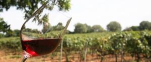 El vi presenta un creixement sostingut quan a dades de comercialització