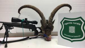 Els Agents Rurals van decomissar un fusell i el cap de la cabra al caçador