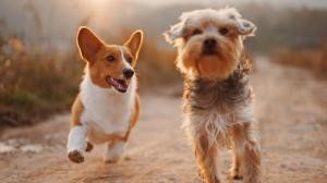Existe un tipo de pienso para perros diferente según la raza, el tamaño o las necesidades nutricionales específicas de nuestra mascota.
