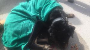 Gos rescatat del Segarra-Garrigues