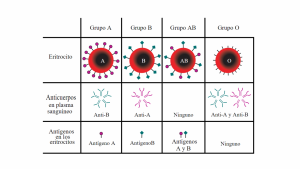 Grupos sanguíneos (Tipos de sangre)