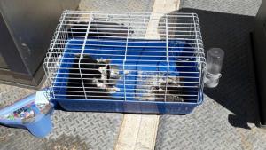 Imatge del gat mort, dins d'una gàbia, al barri de Sant Pere i Sant Pau