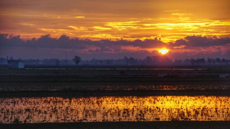 Sortida de sol al Delta de l'Ebre