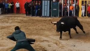 Bou Juanito Festes Taurines Xilxes 2019