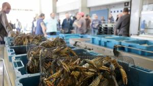 Caixes de cranc blau preparades per a la subhasta de peix a Sant Carles de la Ràpita