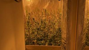 Descobreixen una plantació de marihuana en una casa de Sitges, al Garraf