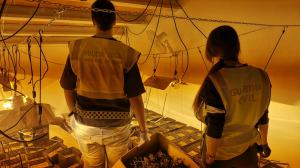 Desmantellen una plantació de marihuana en un xalet de Miami Platja