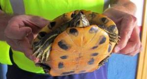 Imatge de la tortuga