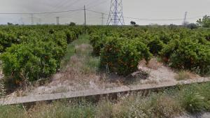 Imatge dels horts de tarongers de la zona de l'ermita de Sant Jaume de Fadrell de Castelló