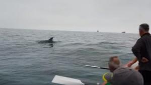 Imatge d'un dofí a la platja del Miracle