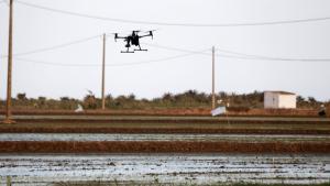Imatge d'un drone sobrevolant els arrossars de Poblenou del Delta.