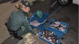 Intervenen més de 120 quilograms de peix que es volia comercialtizar fora de la llotja