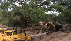 La operación de arrancar el árbol fue un fracaso y el roble murió a los pocos meses