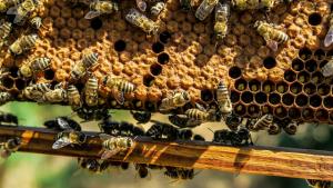 Les abelles són molt importants per mantenir la biodiversitat vegetal del món