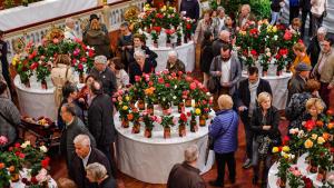 Les imatges del Concurs Exposició Nacional de Roses 2018 a Reus