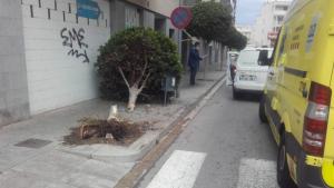 L'impacte entre els cotxes ha acabat arrencant un dels arbres del carrer de Barcelona de la Torre.
