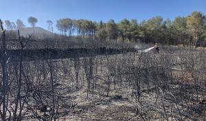 L'incendi ha calcinat 15 hectàrees.