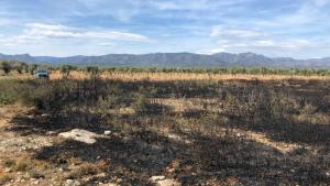 Tres voltors atrets per les restes animals van topar amb una línia elèctrica i això va causar un incendi