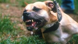 Un perro de la raza bóxer