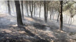 Uns 5.000 metres quadrats han cremat en un incendi forestal a Almoster