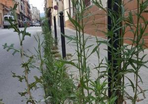 Vegetació enfilant-se al carrer Doctor Ferran de Terrassa