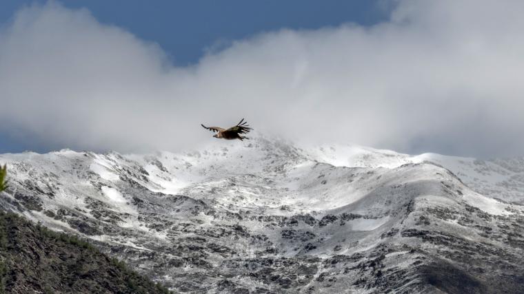 Imatge de l'enfarinada d'aquest dimecres a les cotes altes del Pallars Sobirà