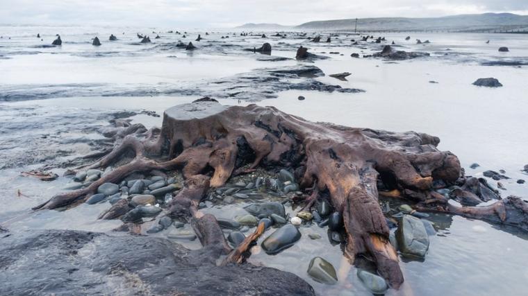 Imatge d'un dels arbres del bosc prehistòric