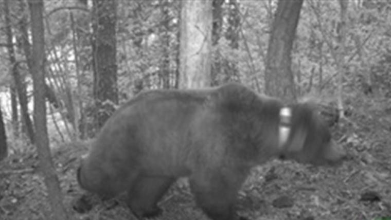 Imatge nocturna del pas de l'ós Goiat al Pirineu