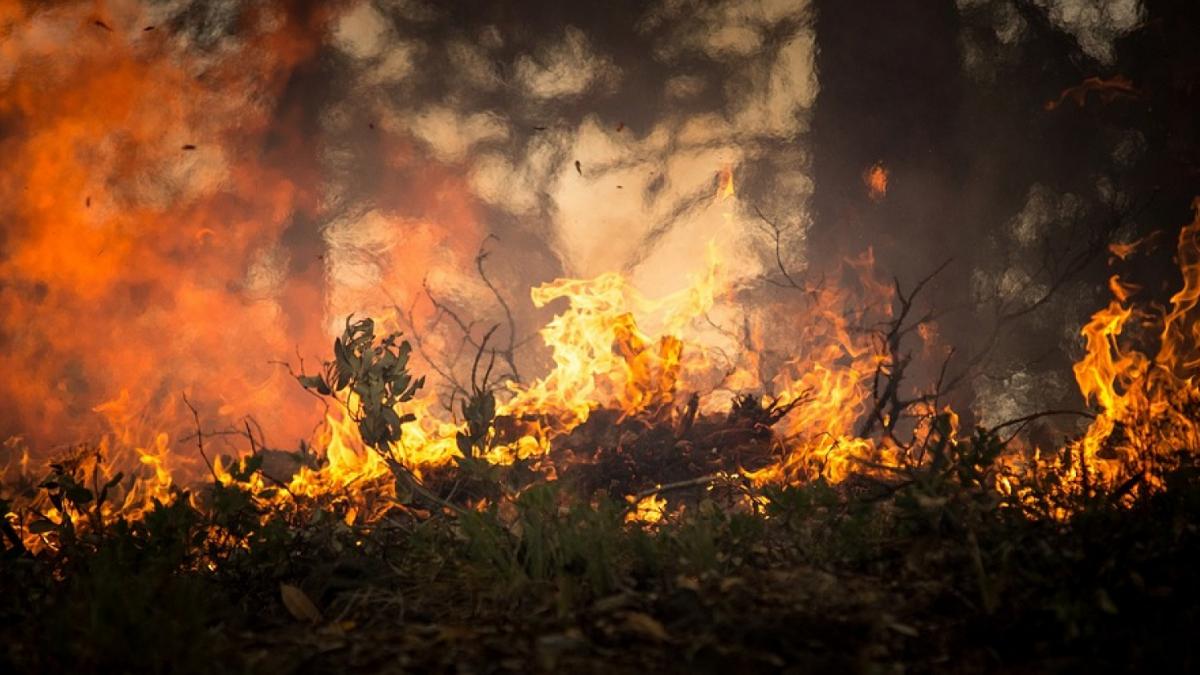 Les Terres de l'Ebre han quedat molt perjudicades per les flames a la zona de la Ribera