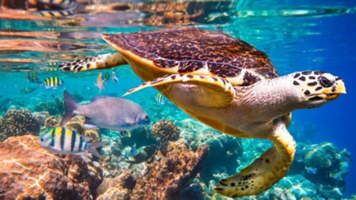 Imatge d'una tortuga marina en el seu hàbitat natural