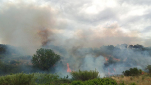 Els Bombers de la Generalitat treballen amb 12 dotacions en un incendi a Corbera d'Ebre