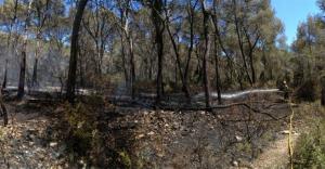 Els Bombers treballen en un petit incendi de vegetació a la urbanització Mas Moregons del Catllar.