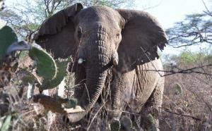 Imagen de uno de los elefantes que se pueden ver en Chebera Churchura.