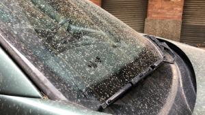 Imatge d'un cotxe després d'un episodi de pluja de fang