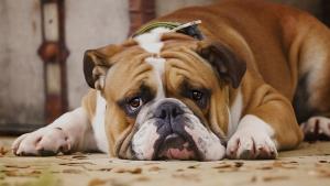 Imatge d'un gos amb cara trista