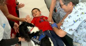 L'infant en plena extracció de sang interactuant amb el gos de la teràpia