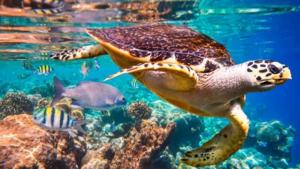 Moltes espècies estan en perill d'extinció per culpa de la mà de l'home