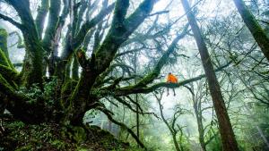Se estima que casi 600 especies vegetales se han extinguido en los últimos 250 años por los humanos