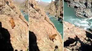 Seqüència d'imatges sobre la caiguda de l'ós pel barranc