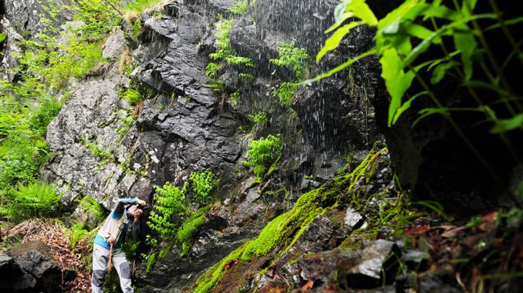 Hi ha racons del Montseny molt humits i amb espessa fresca vegetació