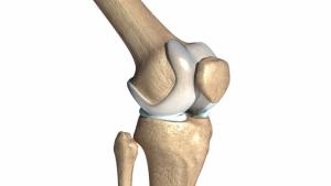 Anatomía de la rodilla: ligamentos, huesos y músculos