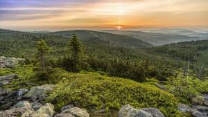 Augmentar la superfície de bosc per combatre el canvi climàtic