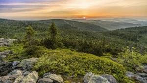 Aumentar la superficie de bosque para combatir el cambio climático
