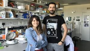 Científicos de la Universidad de Oviedo encuentran relación entre la longevidad y la microbiota intestinal