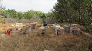 Denunciat un veí d'Amposta com a presumpte organitzador de baralles de galls