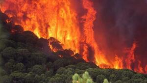 Hasta el 21 de julio el fuego ha arrasado 5 veces más bosque que el año pasado, y estamos cerca de 2009